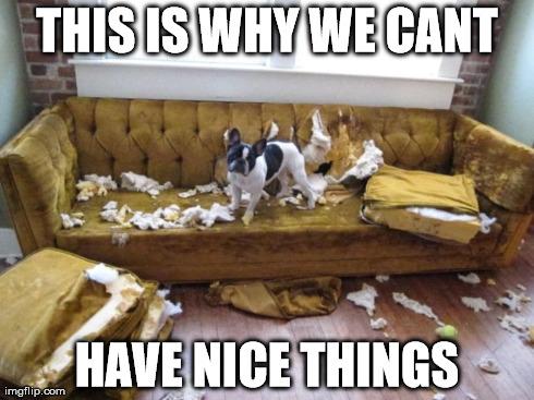 Bark Dog Food
